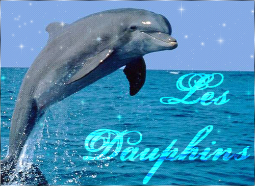 Photo dauphin - Images dauphins a imprimer ...